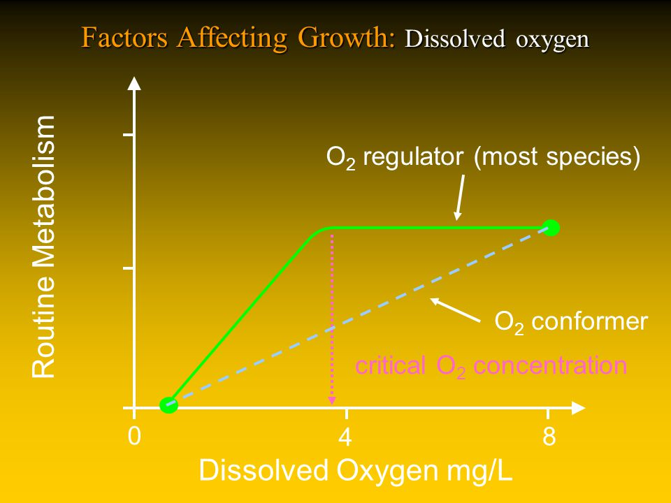 Factors Affecting Growth: Dissolved oxygen Dissolved Oxygen mg/L Routine Metabolism 0 8 4 O 2 regulator (most species) critical O 2 concentration O 2 conformer