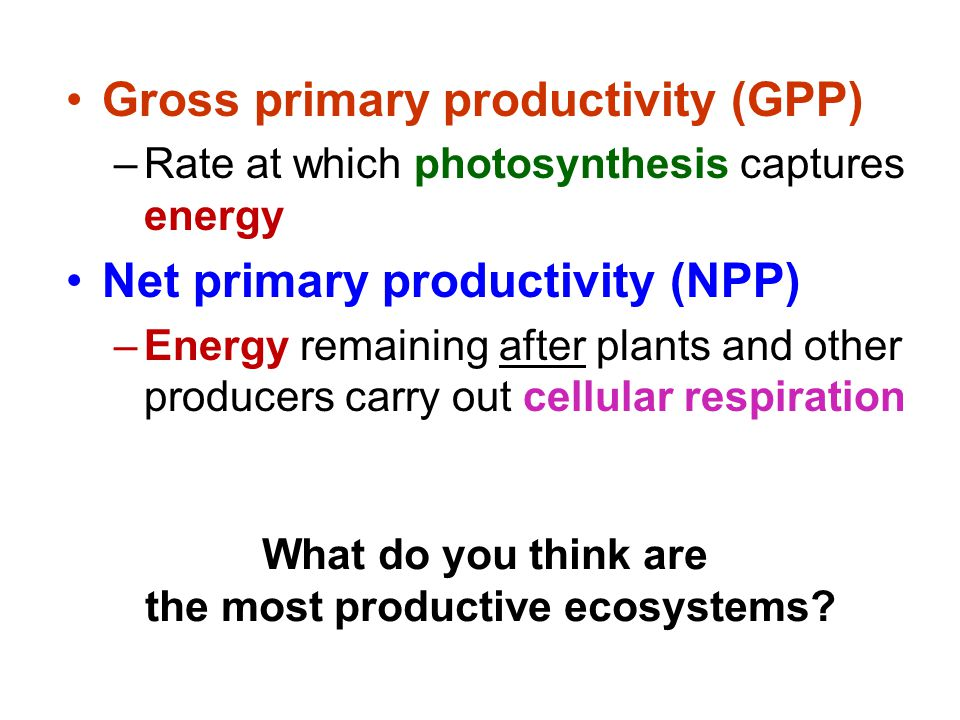Gross primary productivity (GPP) –Rate at which photosynthesis captures energy Net primary productivity (NPP) –Energy remaining after plants and other producers carry out cellular respiration What do you think are the most productive ecosystems?