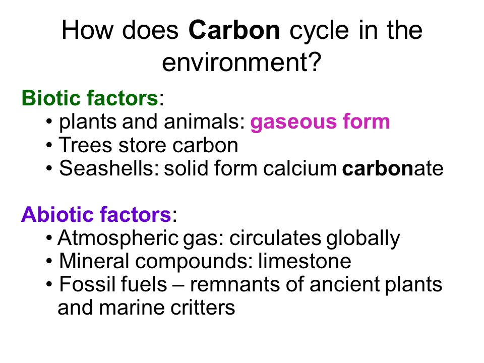 How does Carbon cycle in the environment.