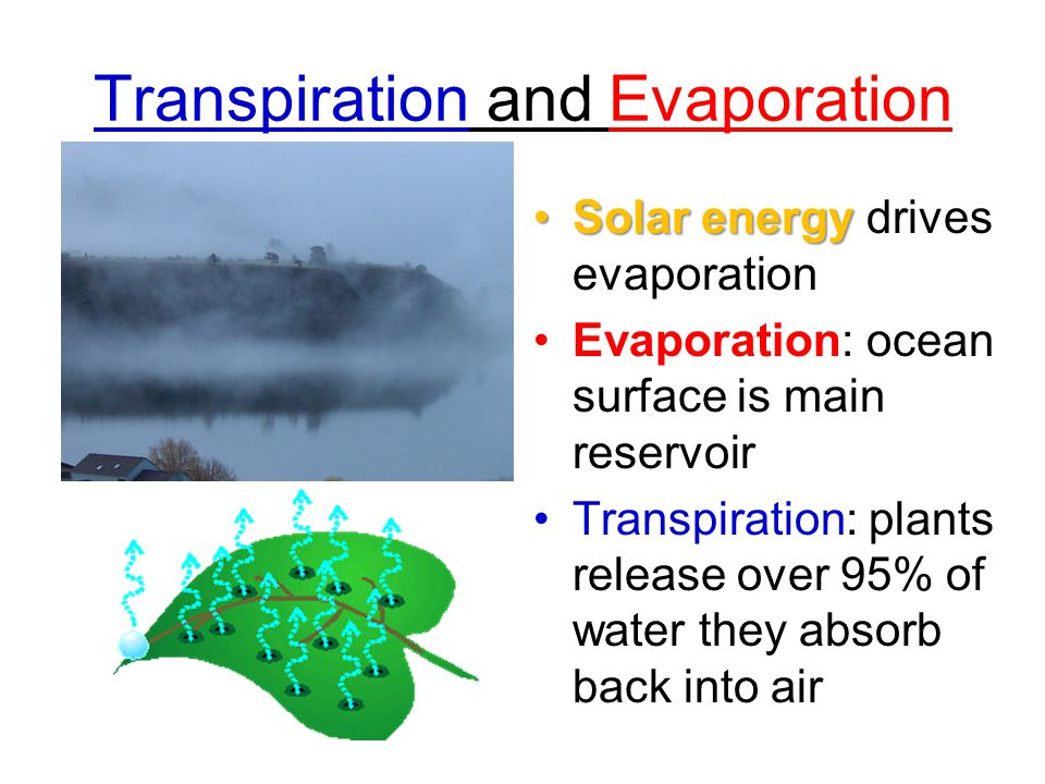 Transpiration and Evaporation Solar energySolar energy drives evaporation Evaporation: ocean surface is main reservoir Transpiration: plants release o