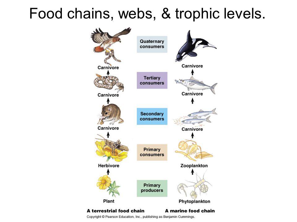 Trophic relationships important in endangered wildlife management: e.g. DDT  Bald Eagle & Condors
