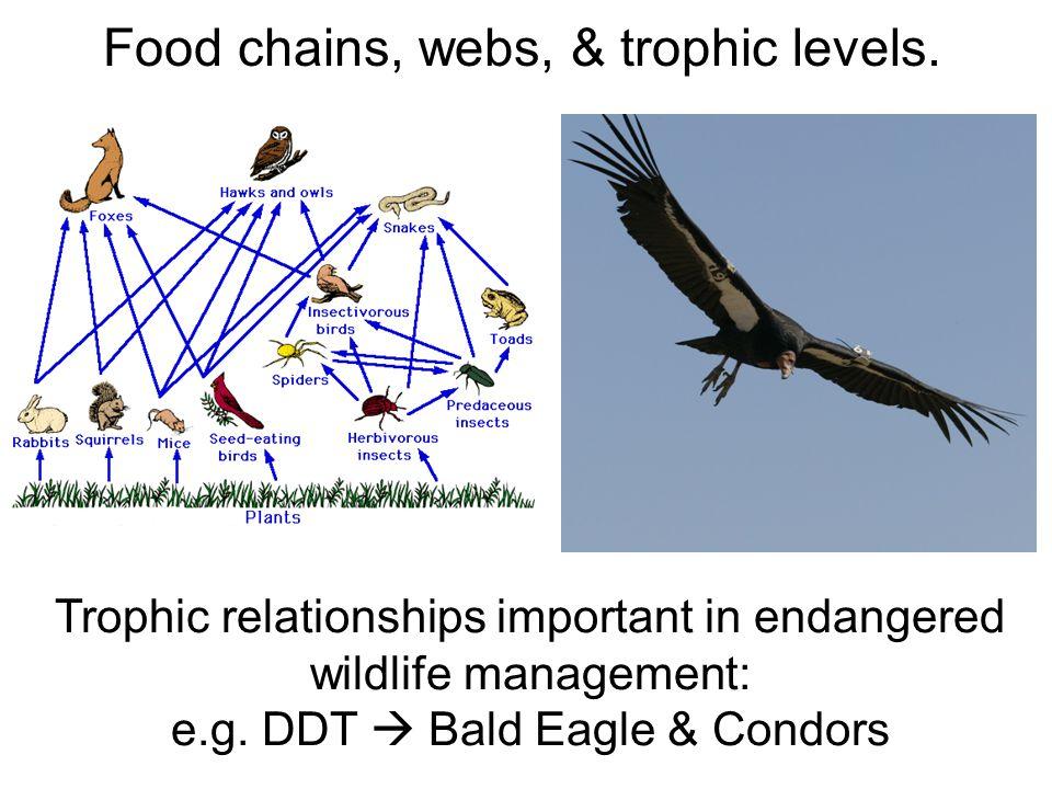 Top-down processes: Increase in top predators cascades down food web