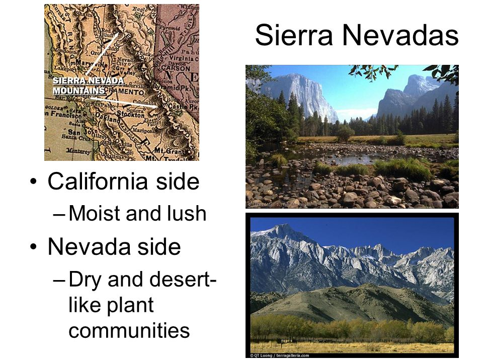 Sierra Nevadas California side –Moist and lush Nevada side –Dry and desert- like plant communities