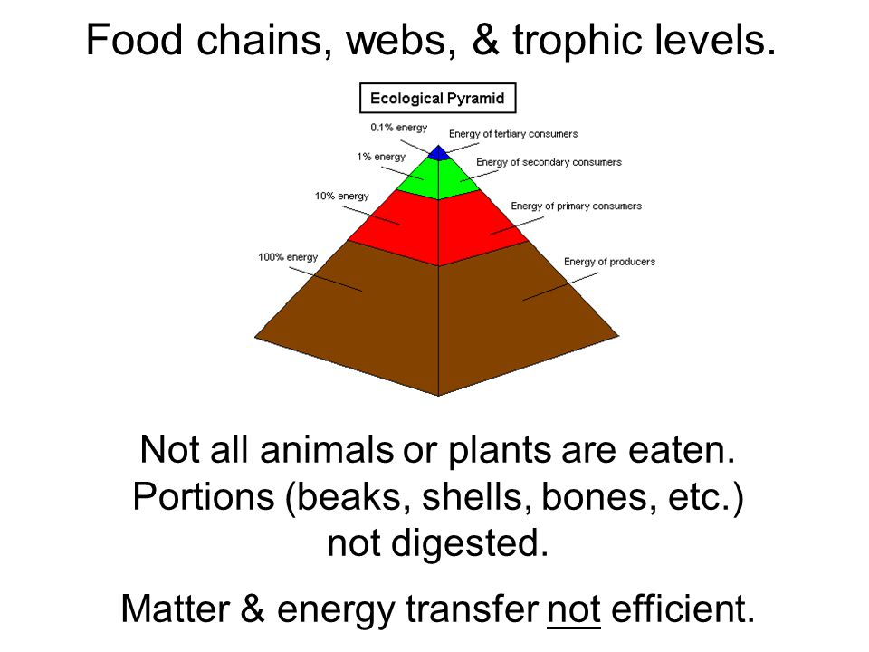 Pyramids of biomass Generally amount of biomass decreases at successively higher trophic levels.