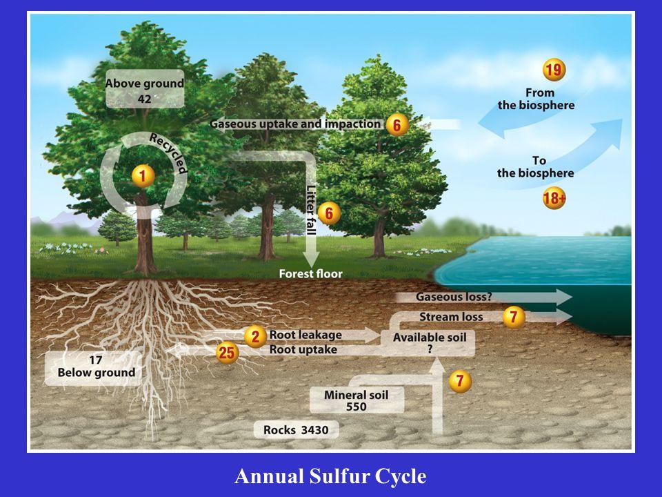 Annual Sulfur Cycle