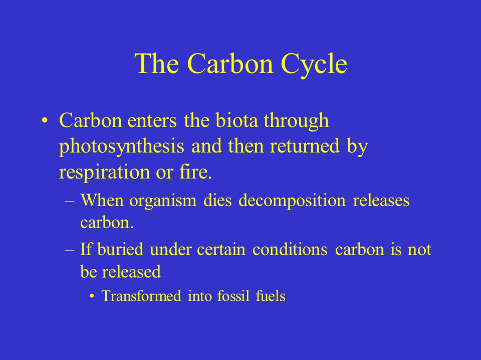 The Carbon Cycle Carbon enters the biota through photosynthesis and then returned by respiration or fire. –When organism dies decomposition releases c