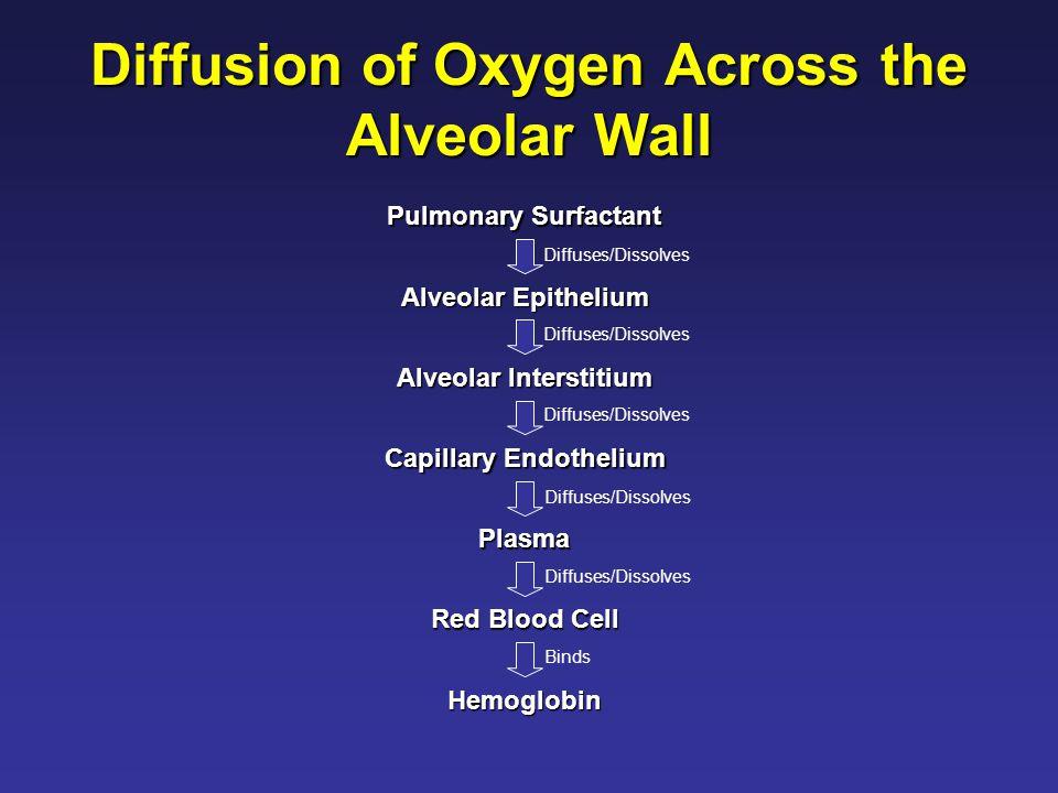 Diffusion of Oxygen Across the Alveolar Wall Pulmonary Surfactant Alveolar Epithelium Alveolar Interstitium Capillary Endothelium Plasma Red Blood Cell Hemoglobin Diffuses/Dissolves Binds