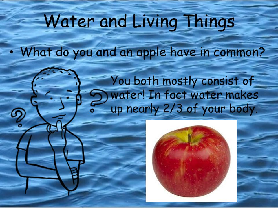 Water and Living Things What do you and an apple have in common.