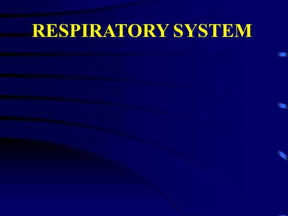 I.Respiratory system - General purpose and structure 1.