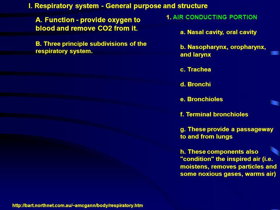 2.RESPIRATORY PORTION a. respiratory bronchioles b.
