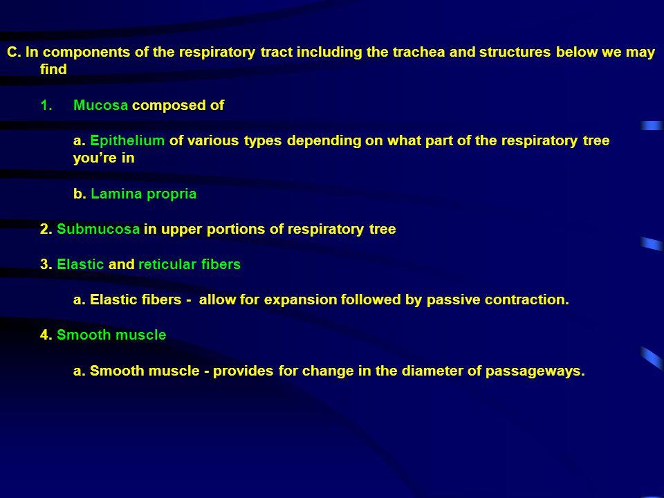 B.Between the epithelia of adjacent alveoli are 1.