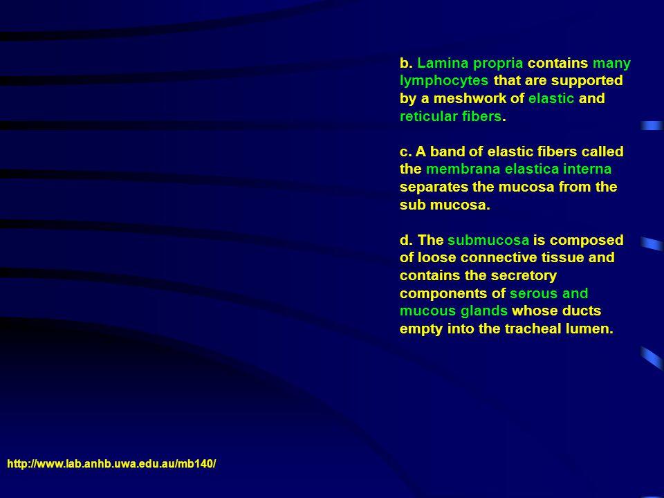 B.EIGHT TYPES OF CELLS FOUND IN RESPIRATORY EPITHELIUM.