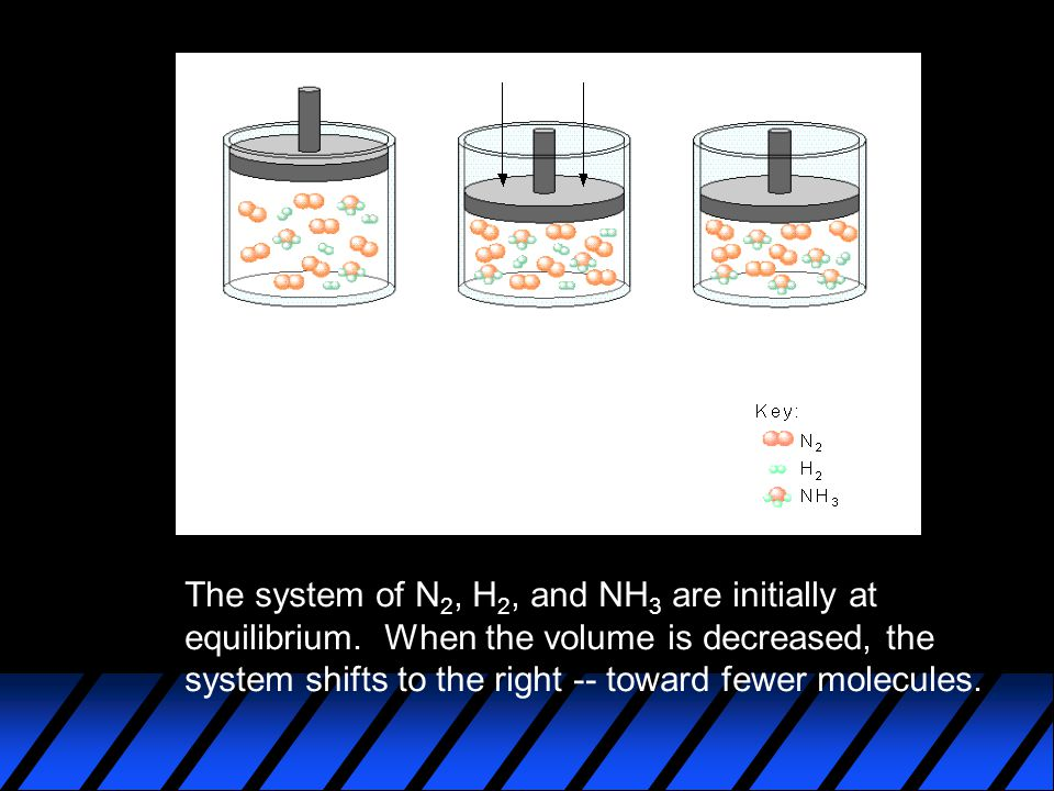 The system of N 2, H 2, and NH 3 are initially at equilibrium.