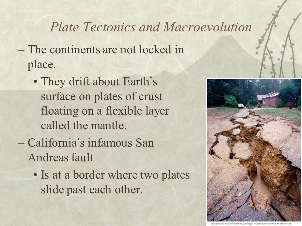 Plate Tectonics and Macroevolution –The continents are not locked in place.