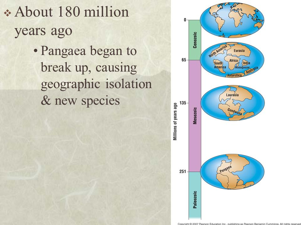  About 180 million years ago Pangaea began to break up, causing geographic isolation & new species