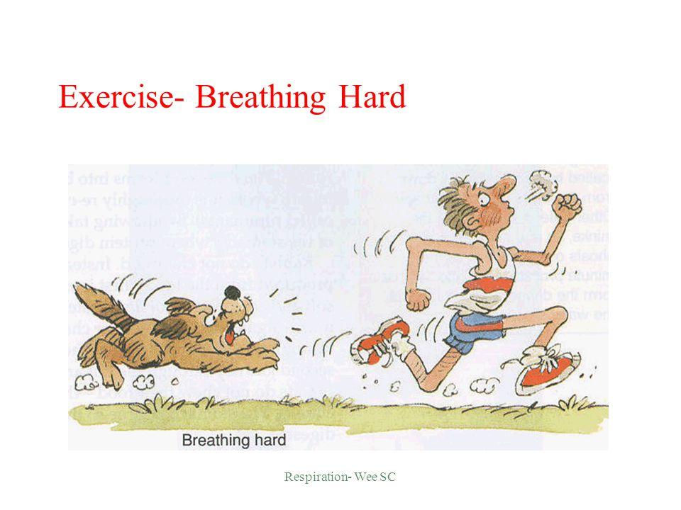 Respiratory System Return