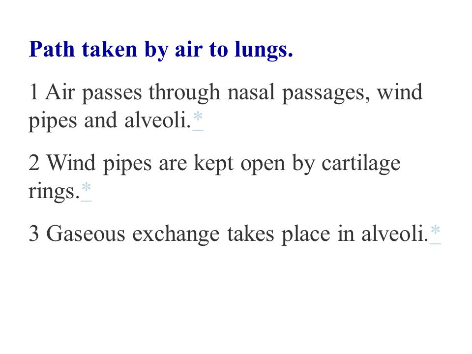 Breathing System - Nasal Passage nasal cavity voice box windpipe epiglottis