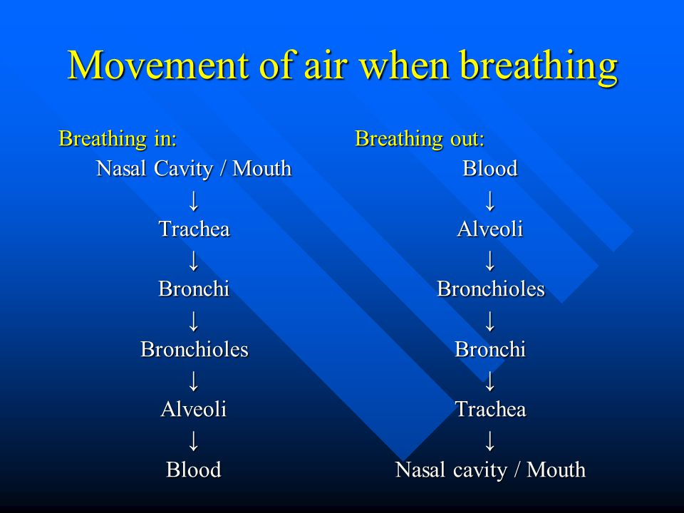 Movement of air when breathing Breathing in: Nasal Cavity / Mouth ↓Trachea↓Bronchi↓Bronchioles↓Alveoli↓Blood Breathing out: Blood ↓ Alveoli ↓ Bronchioles ↓ Bronchi ↓ Trachea ↓ Nasal cavity / Mouth