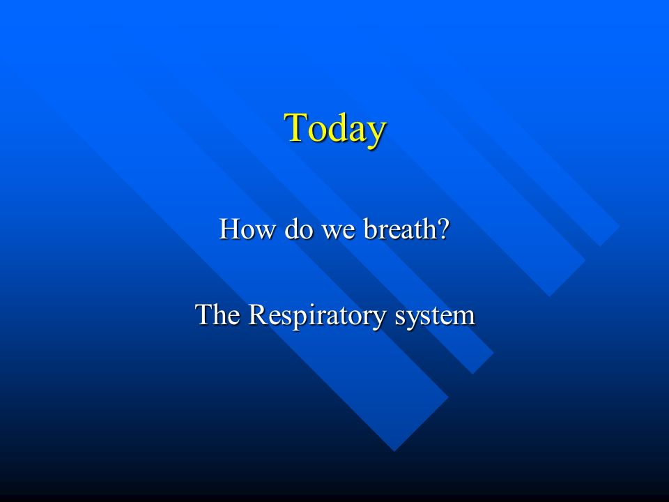 Today How do we breath? The Respiratory system