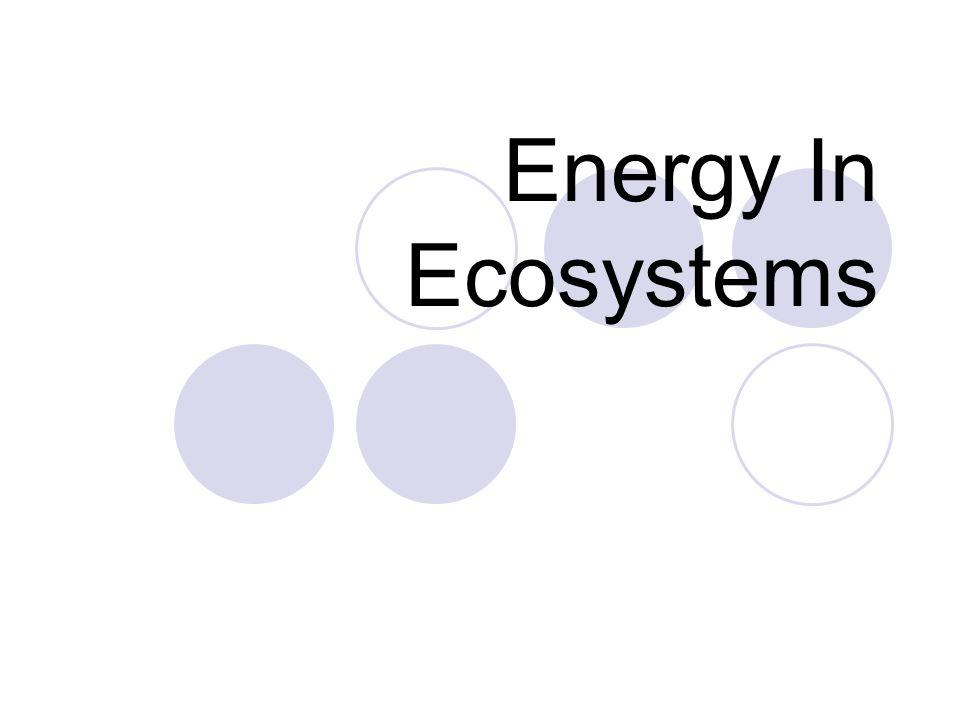 Energy In Ecosystems