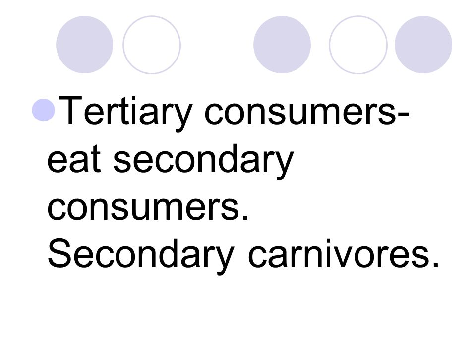 Tertiary consumers- eat secondary consumers. Secondary carnivores.
