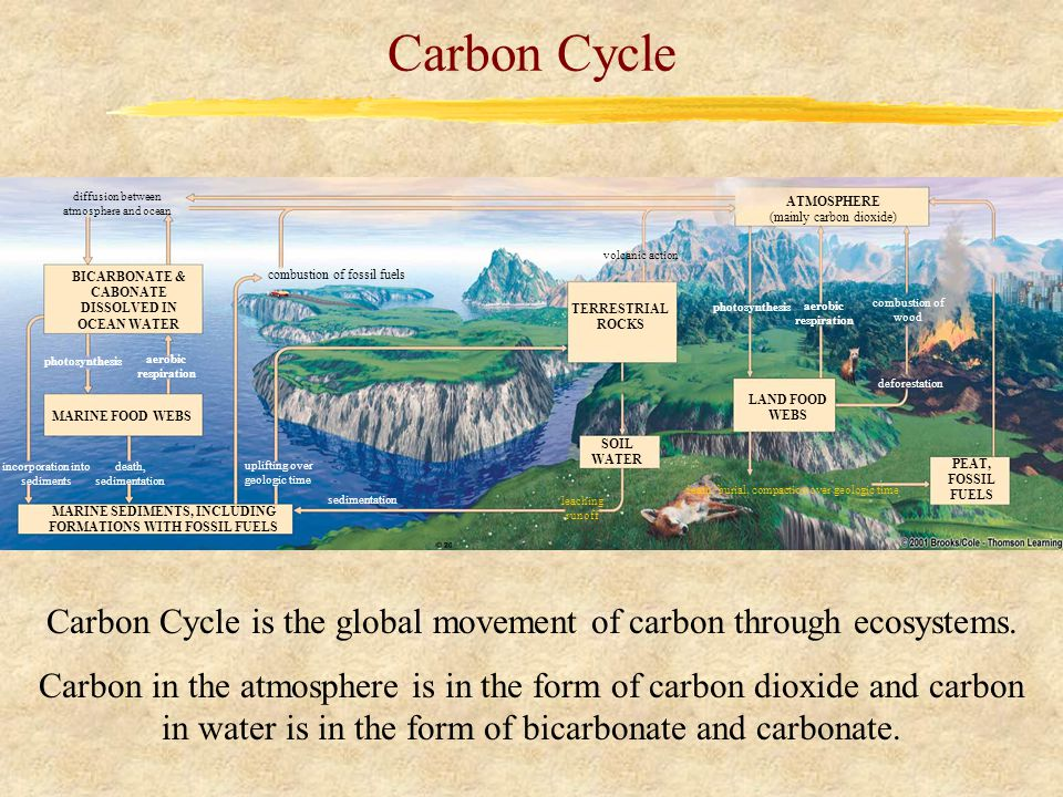Carbon Cycle diffusion between atmosphere and ocean BICARBONATE & CABONATE DISSOLVED IN OCEAN WATER MARINE FOOD WEBS MARINE SEDIMENTS, INCLUDING FORMATIONS WITH FOSSIL FUELS combustion of fossil fuels incorporation into sediments death, sedimentation uplifting over geologic time sedimentation photosynthesis aerobic respiration photosynthesis aerobic respiration TERRESTRIAL ROCKS SOIL WATER LAND FOOD WEBS ATMOSPHERE (mainly carbon dioxide) PEAT, FOSSIL FUELS combustion of wood deforestation volcanic action death, burial, compaction over geologic time leaching runoff Carbon Cycle is the global movement of carbon through ecosystems.