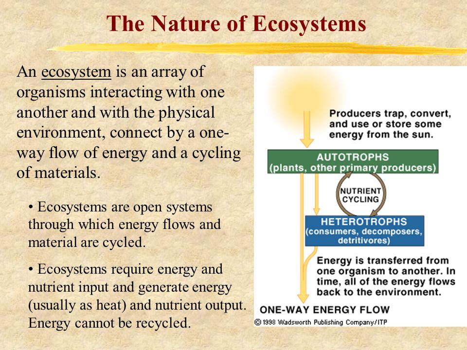 The Nature of Ecosystems An ecosystem is an array of organisms interacting with one another and with the physical environment, connect by a one- way flow of energy and a cycling of materials.