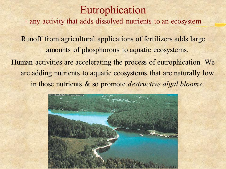 Eutrophication - any activity that adds dissolved nutrients to an ecosystem Runoff from agricultural applications of fertilizers adds large amounts of phosphorous to aquatic ecosystems.