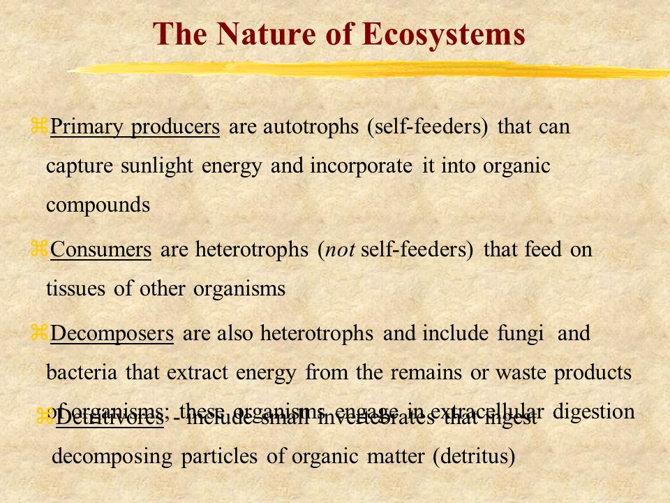 The Nature of Ecosystems zPrimary producers are autotrophs (self-feeders) that can capture sunlight energy and incorporate it into organic compounds zConsumers are heterotrophs (not self-feeders) that feed on tissues of other organisms zDecomposers are also heterotrophs and include fungi and bacteria that extract energy from the remains or waste products of organisms; these organisms engage in extracellular digestion zDetritivores - include small invertebrates that ingest decomposing particles of organic matter (detritus)