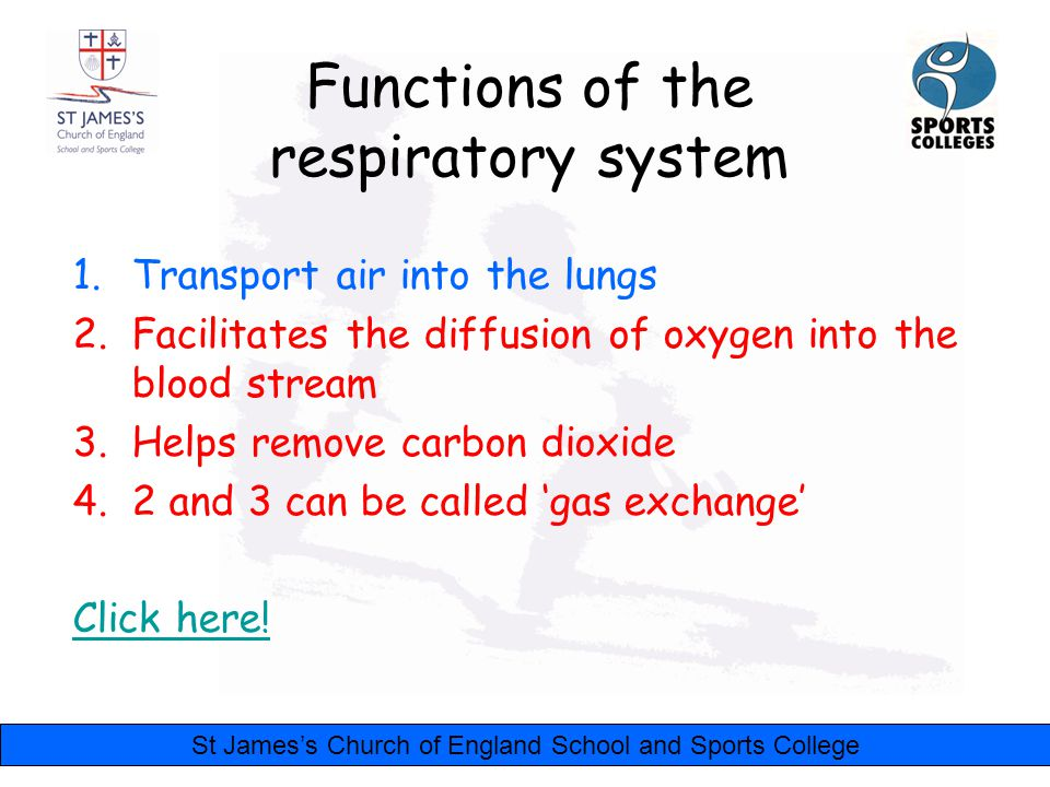St James's Church of England School and Sports College Functions of the respiratory system 1.Transport air into the lungs 2.Facilitates the diffusion of oxygen into the blood stream 3.Helps remove carbon dioxide 4.2 and 3 can be called 'gas exchange' Click here!