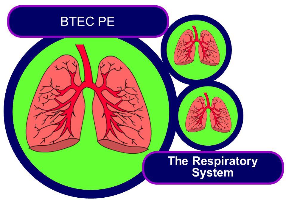 The Respiratory System BTEC PE