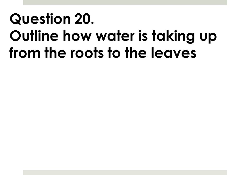 Question 20. Outline how water is taking up from the roots to the leaves