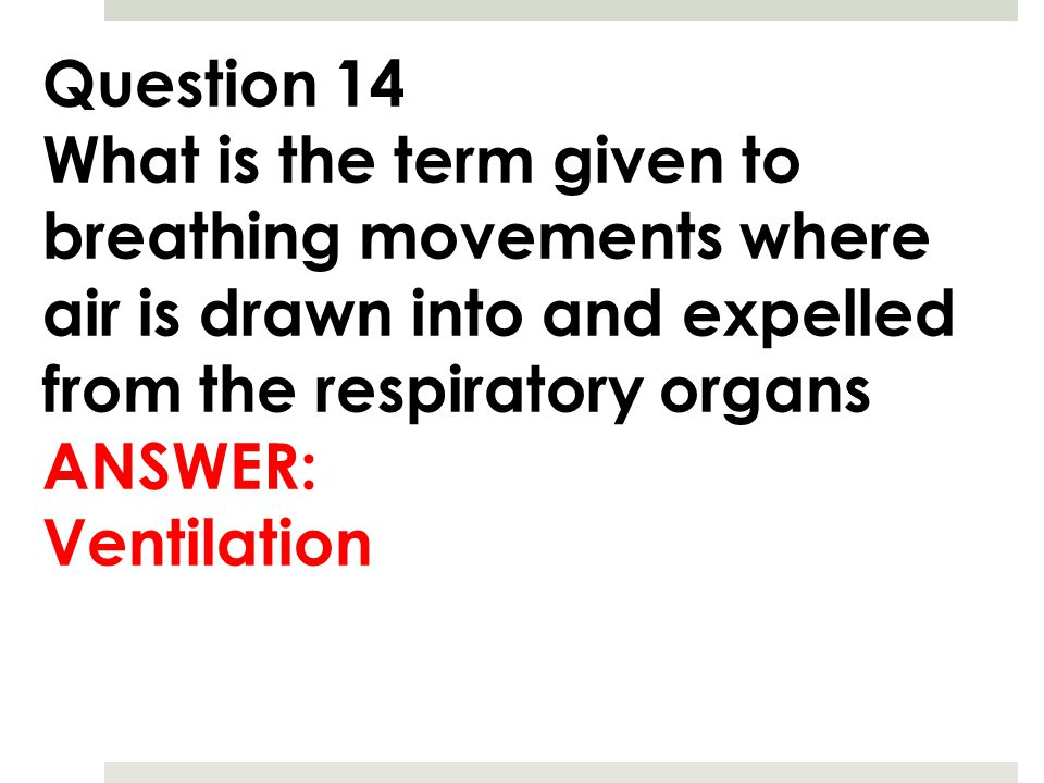 Question 14 What is the term given to breathing movements where air is drawn into and expelled from the respiratory organs ANSWER: Ventilation
