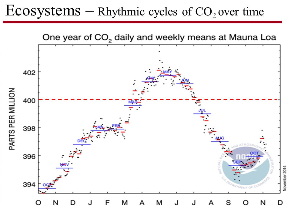 Ecosystems – Rhythmic cycles of CO 2 over time