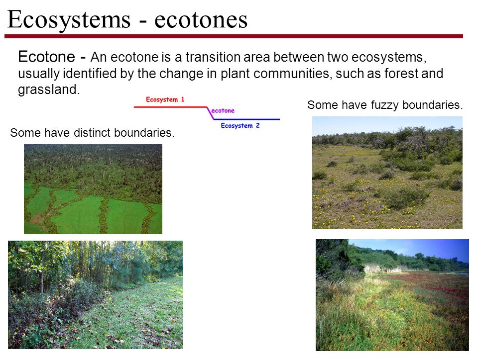 Ecosystems - ecotones Ecotone - An ecotone is a transition area between two ecosystems, usually identified by the change in plant communities, such as forest and grassland.