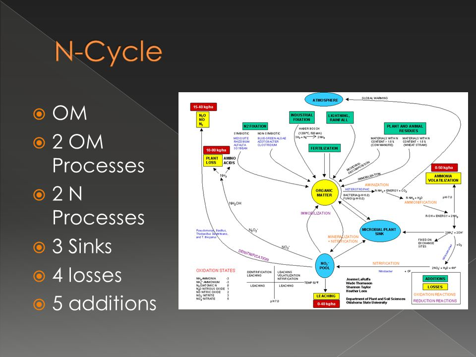  OM  2 OM Processes  2 N Processes  3 Sinks  4 losses  5 additions