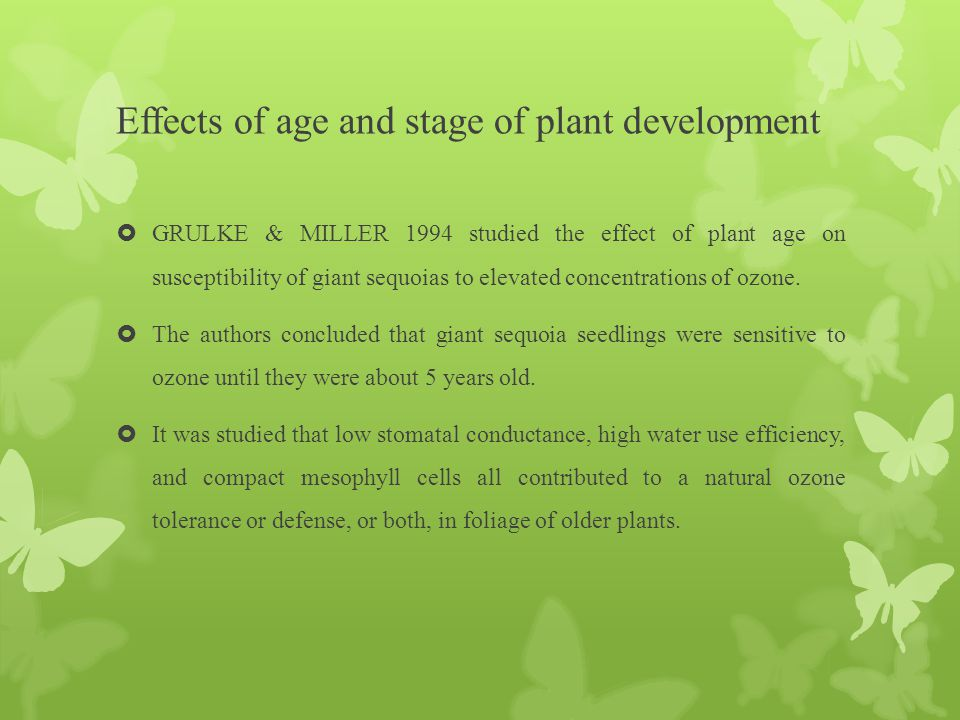 Effects of age and stage of plant development  GRULKE & MILLER 1994 studied the effect of plant age on susceptibility of giant sequoias to elevated c