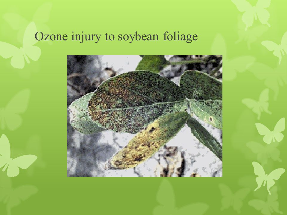 Ozone injury to soybean foliage