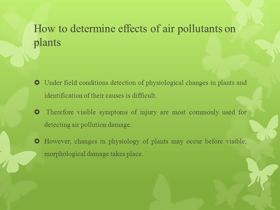 How to determine effects of air pollutants on plants  Under field conditions detection of physiological changes in plants and identification of their