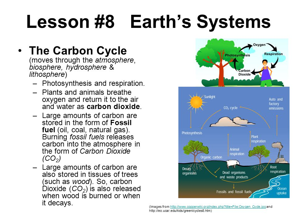 The Carbon Cycle (moves through the atmosphere, biosphere, hydrosphere & lithosphere) –Photosynthesis and respiration.