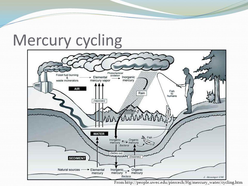Mercury cycling From http://people.uwec.edu/piercech/Hg/mercury_water/cycling.htm