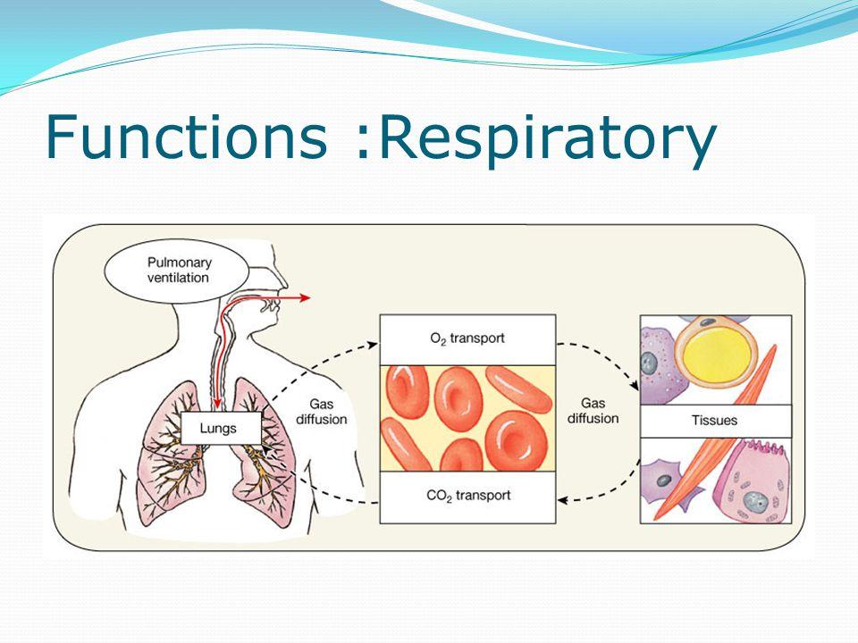 Functions :Respiratory