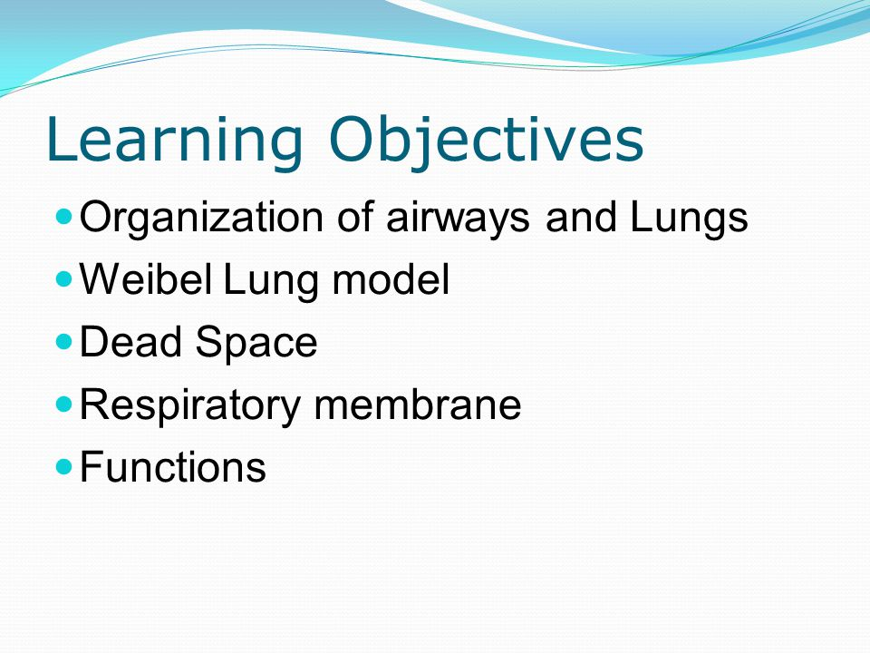 Learning Objectives Organization of airways and Lungs Weibel Lung model Dead Space Respiratory membrane Functions