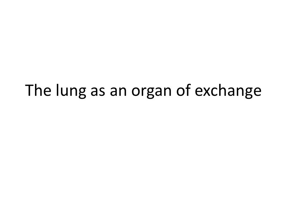 The lung as an organ of exchange