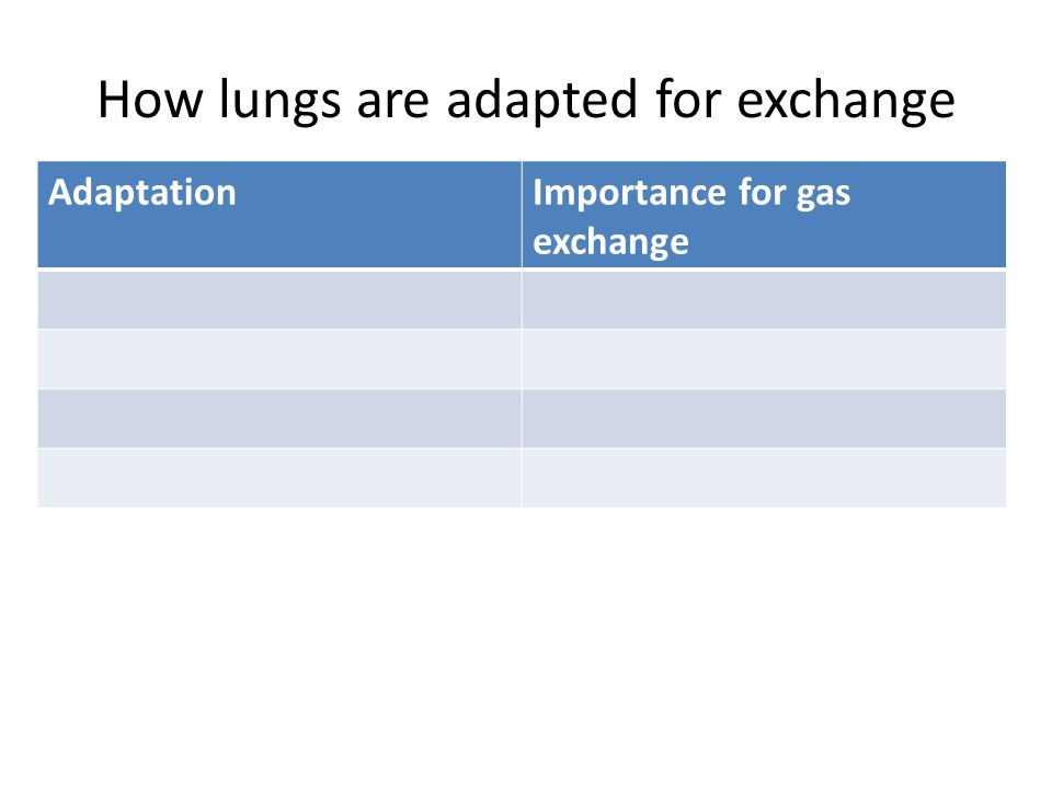How lungs are adapted for exchange AdaptationImportance for gas exchange