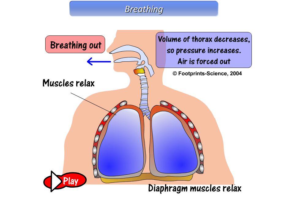 Breathing Breathing