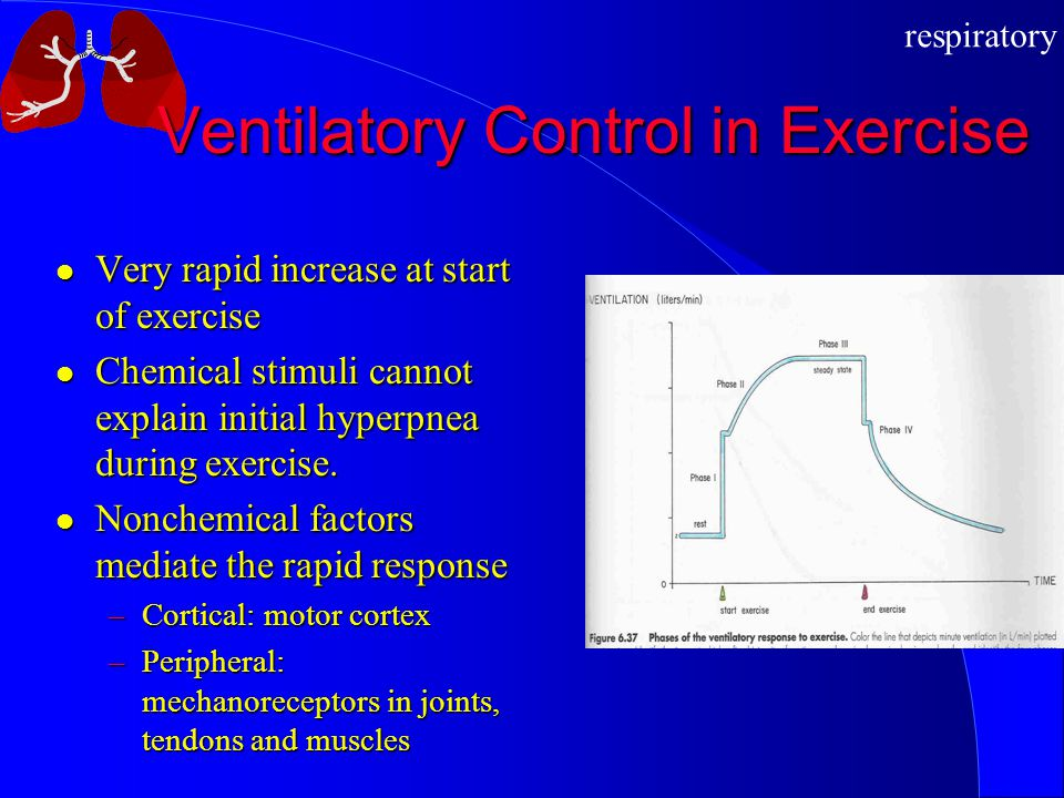 respiratory Ventilatory Control in Exercise Very rapid increase at start of exercise Very rapid increase at start of exercise Chemical stimuli cannot explain initial hyperpnea during exercise.