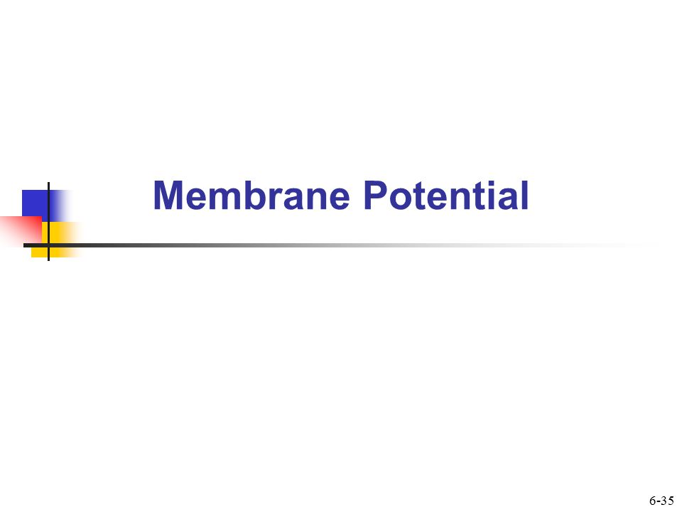 Membrane Potential  Is difference in charge across membranes  Results in part from presence of large anions being trapped inside cell  Diffusable cations such as K + are attracted into cell by anions  Na + is not permeable and is actively transported out 6-36