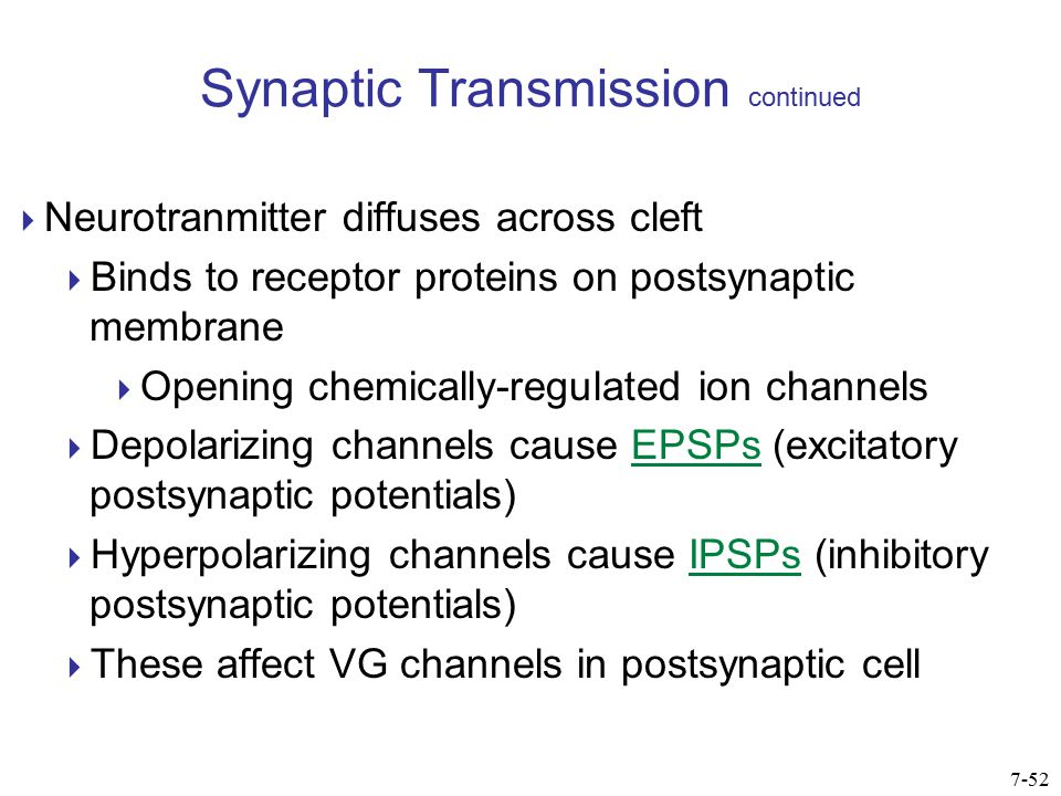 Synaptic Transmission continued  EPSPs and IPSPs summate  If MP in postsynaptic cell reaches threshold at the axon hillock, a new AP is generated  axon hillock has many VG channels and is site where APs are normally initiated 7-53