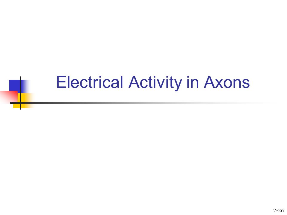 Electrical Activity in Axons 7-26